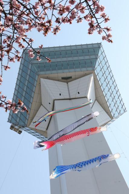 五稜郭タワー塔体に設置されたこいのぼり(20日午前10時25分ごろ)