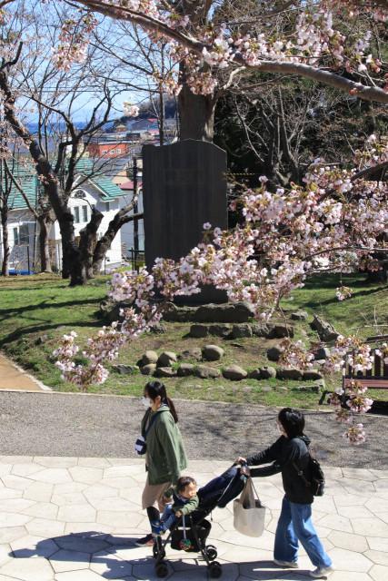 サクラの下を散策する市民。奥に建つ桜之碑には逸見小右衛門の功績が刻まれている