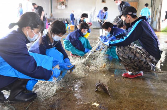 網にかかっている魚を外す生徒ら